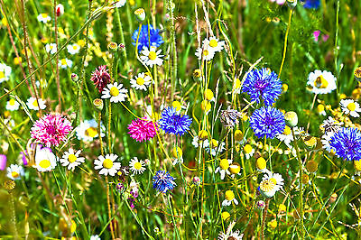 Wildflower Mixture for Loam Soils - Approx coverage 3 metres