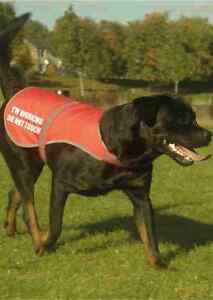 Estoy-trabajando-no-impreso-alta-Vis-Hi-Viz-Perro-Mascota-Seguridad-Chaleco-reflectante-abrigo