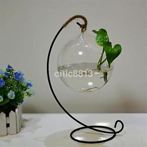 Hanging-Ball-Glass-Flower-Planter-Vase-Terrarium-Container-Home-Garden-Decor-AU