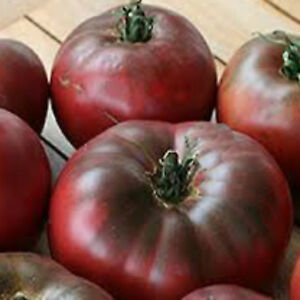 Tomato-CHEROKEE-PURPLE-HEIRLOOM-UNUSUAL-COLOUR-SWEET-TOMATO-25-SEEDS