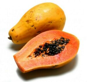 Papaya plant du du cuttings Carica L. Caricaceae pawpaw Carica papaya seed US 50
