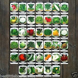 40-Original-1920s-Card-Seed-Co-VEGETABLE-SEED-PACK-COLLECTION-1920s-NOS-Unused