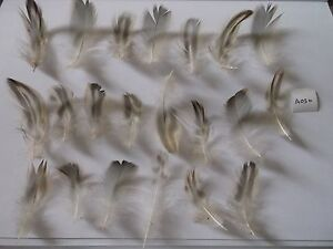 21 x 57cm long natural patterned feathers for crafts hats dyeing free PampP - Birmingham, United Kingdom - 21 x 57cm long natural patterned feathers for crafts hats dyeing free PampP - Birmingham, United Kingdom