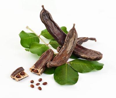 Carob Chocolate Tree seeds 20 Graines de Caroubier Ceratonia siliqua