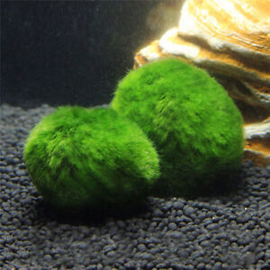 2pcs-Moss-Balls-Live-Plants-Marimo-Ball-Shrimps-For-Aquarium-Fish-Tank-LU7