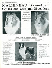 ROUGH COLLIE OUR DOGS 1951 DOG BREED KENNEL ADVERT PRINT PAGE MARIEMEAU KENNEL