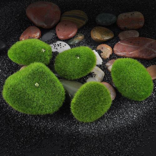 Marimo Stone Moss Miniature Dollhouse Garden Craft Fairy Bonsai Plant Decor ✔FJ