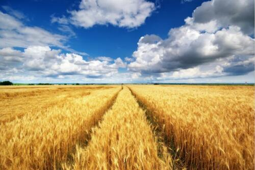 Details about  /3D Field Wheat Wall Stickers Vinyl Murals Wall Print Decal Deco Art AJ STORE AU