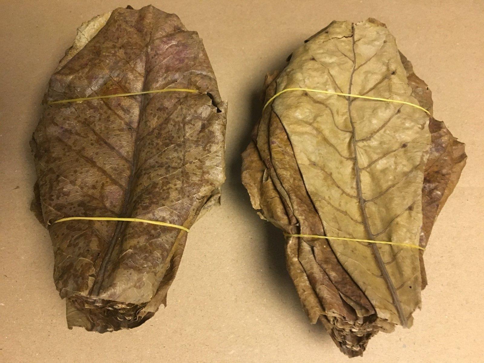 OFFERTA COMBINATA: 700 grammi Seemandelbaumblätter ~ 20cm  700 grammi di Ontano pigne