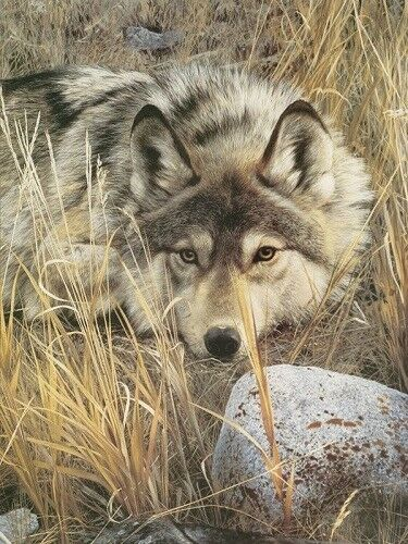 Detail by Carl Brenders Wolf Print 13x19 One on One