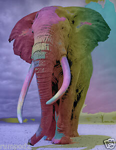 Elephant Poster//Elephants//Animal Poster//Pop Art//17x22in//Great!