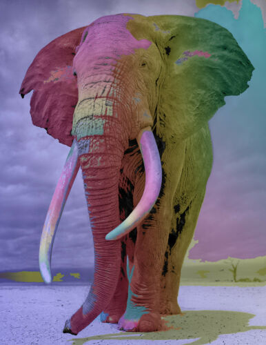 Elephant Poster//Print//Animal Poster//Pop Art//17x22inches//Great!//Jungle//colorful