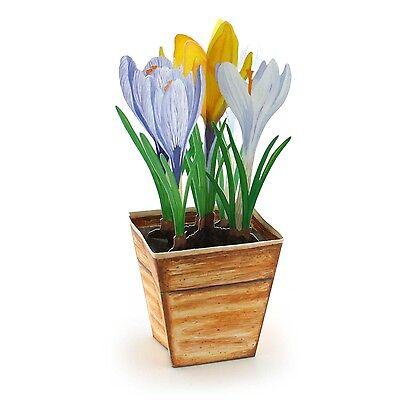 Pop-Up-3 D-Karte KROKUSSE ein Blumen-Topf mit bunten Krokussen Umschlag