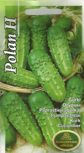 Pickling field short small cucumber Polan H seeds Cucumis sativus Oгурцы Gurķi