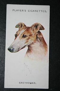 Greyhound    1920039s Vintage Dog Portrait Card   VGC - Melbourne, Derbyshire, United Kingdom - Returns accepted Most purchases from business sellers are protected by the Consumer Contract Regulations 2013 which give you the right to cancel the purchase within 14 days after the day you receive the item. Find o - Melbourne, Derbyshire, United Kingdom