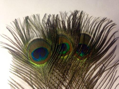 Paon yeux plumes naturelles 10-12 pouces uk stock