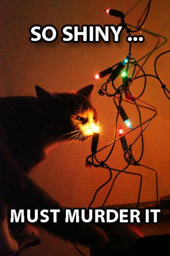 Christmas Shiny Must Murder It Humor Art Funny Cat Fridge Toolbox Magnet 2 x 3