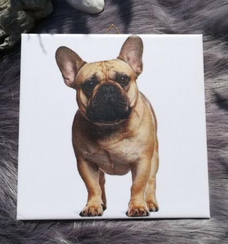 Gift Idea Tile 149 Dekofliese Mural Picture Tile Dog Bulldog