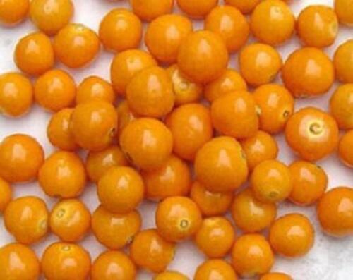 Chinese Lantern EDIBLE GOLDEN BERRY cherries physalis peruviana berries 25 SEEDS
