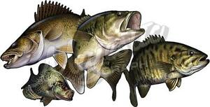 MIXED-BAG-FISH-DECAL-410mm-x-210mm-Boat-Kayak-Car-Decal