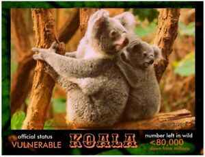 The Koala Bear, an Endangered Species by Postcards To SaveThePlanet