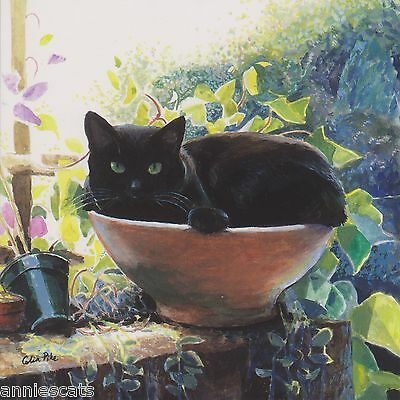Black Cat In Terracotta Pot Greetings Card From Painting By Celia Pike 021