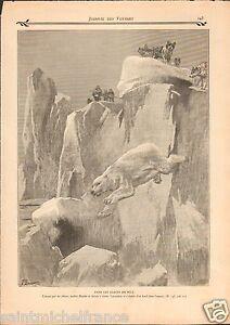 POLAR-BEAR-OURS-POLAIRE-Fridtjof-Nansen-1904-ILLUSTRATION-ANTIQUE-PRINT