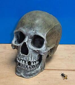 Life like human skull aquarium ornament decoration fish for Fish tank skull decoration