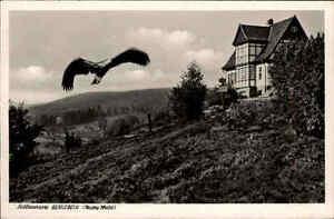 Berlebeck-1953-Partie-Adlerwarte-Teutoburger-Wald-Adler-Vogel-Fachwerk-Gebaeude