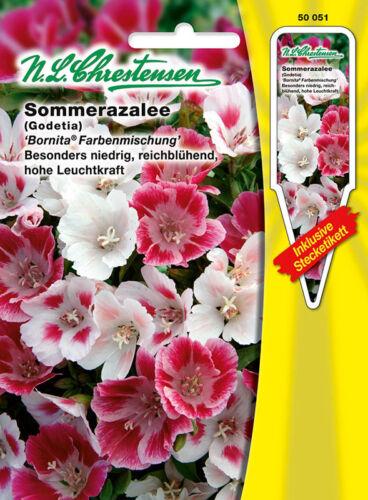 Sommerazalee /' Bornita/' besonders niedrig Farbenmischung Godetia 50051 Samen