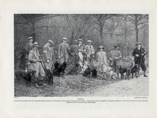 LABRADOR RETRIEVER SCENE AT 25TH GUNDOG FIELD TRIALS OLD ORIGINAL DOG PRINT