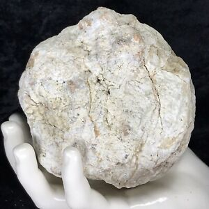 "4"" Large Geode Crystal Rattler Unopened Quartz Chalcedony Break Your Own 1.14Lb"