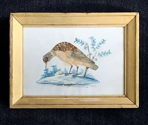 Folk-Art-Bird-19th-Century-Watercolor-and-Feathers