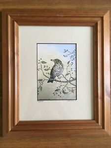 Song-Thrush-By-John-Dolton-Mounted-amp-Framed-Print-Hand-Signed-amp-Titled-By-Artist