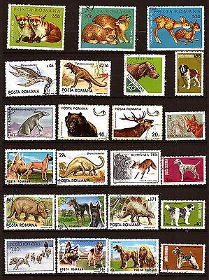 Gutherzig Rumänien Tiere Wild Haustiere Inländische 52m-d105