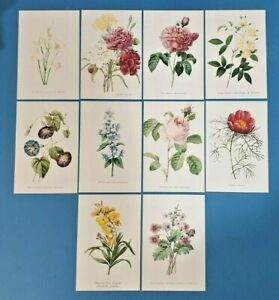 Set-of-10-NEW-Flowers-Postcards-set-3-for-Postcrossing-amp-Postcardsofkindness
