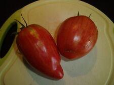 "5   Tomatensamen   "" Striped Roman ""   Samen Sämereien Tomaten"