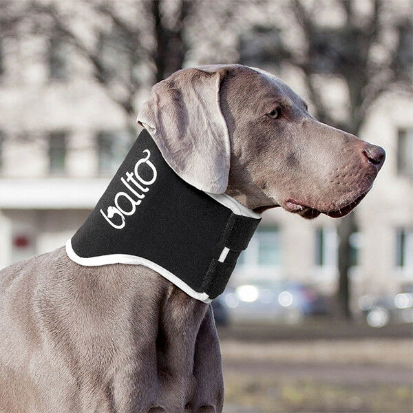Balto – Dog no-lick Neck Brace   BT-NECK-ECO