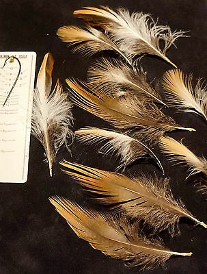 EURASIAN JAY WING FEATHERS  SALMON  FLY TYING  FISHING NATIVE AMERICAN CRAFTS