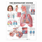 The Respiratory System Anatomical Chart by Anatomical Chart Co. (Fold-out book or chart, 2000)