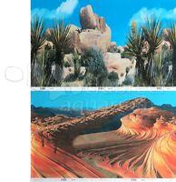 Desert Cactus Sand Stone Canyon 2 Scene 18-20h Aquarium/reptile Background