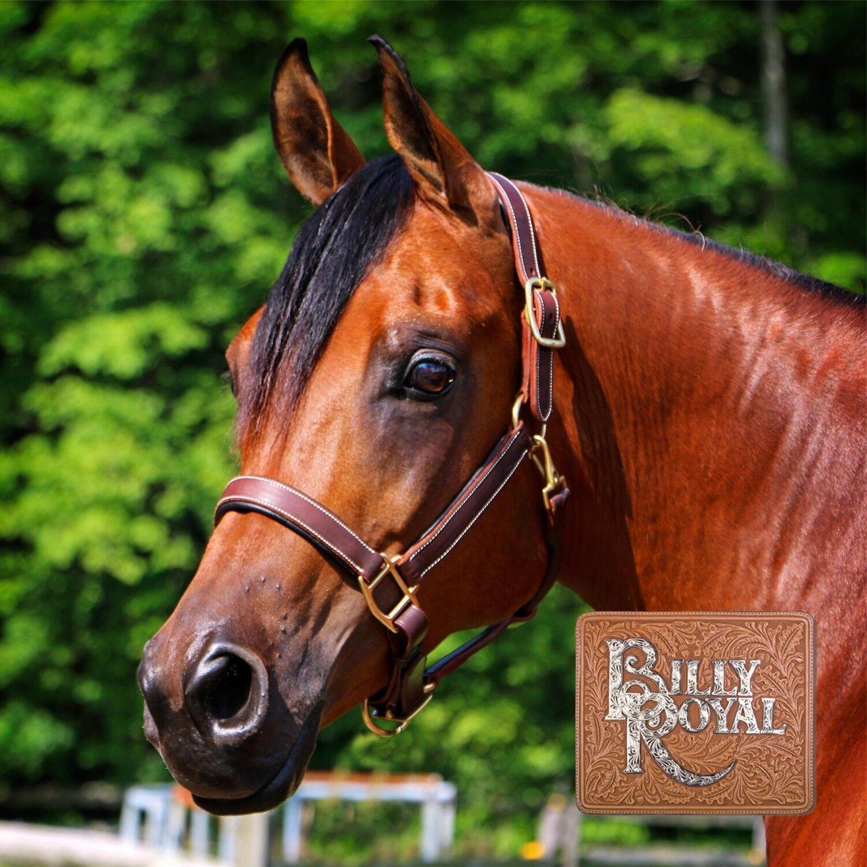 Billy Royal Saratoga Acolchado Cuero estable Halter-Completo Tamaño de caballo