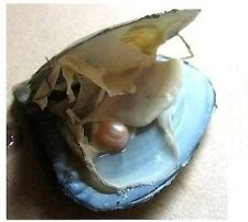 Oyster with Real Pearl.. Needs to be cut out of the oyster