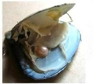 Live oysters with pearls inside - photo#15