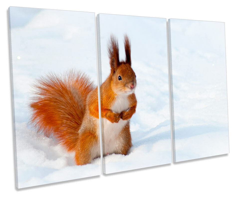 rot rot rot Squirrel Snow Picture TREBLE CANVAS WALL ART Print 519e3a