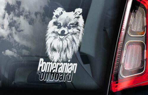 Pom Hund Zwergspitz Fenster Bumper Decal Gift V03 Westpommern Auto Aufkleber