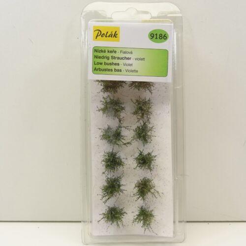 Polak 9186 bassi arbusti viola fogliame finemente altezza circa 15-20mm