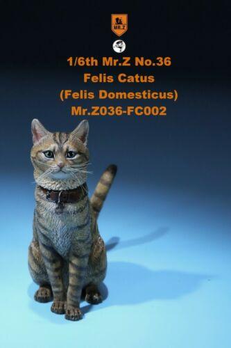 Mr.Z Simulation Animal Model MRZ036 1//6 domestic Cat 6 Colors Soldier Figure Toy