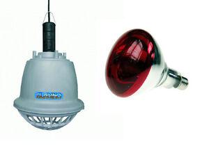 Imperdibile riflettore riscaldante lampada infrarossi per maiali