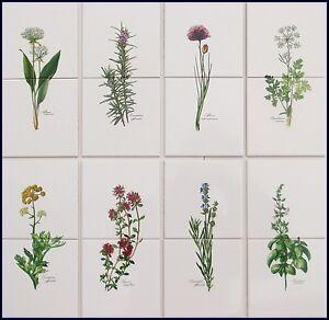 Dettagli su 10x10 piastrelle da cucina con erbe motivi basilico Erba  Cipollina Rosmarino Timo- mostra il titolo originale